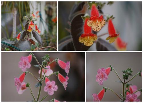 FotorCreated6.jpg